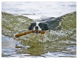 09|05|2012 – Schwimmstunde