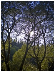 16 09 2012 – Herbstsonne