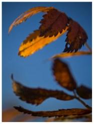 20|09|2012 – Herbstfarben