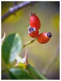02|09|2012 – Herbstboten, die Erste …