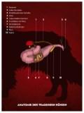 Die Anatomie der tragenden Hündin ©