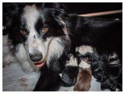 13 11 2012 – Mutterglück