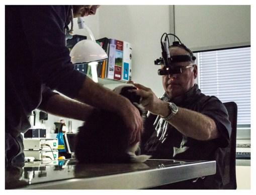03|01|2013 – Ophthalmoskopie bei Dr. Köhler