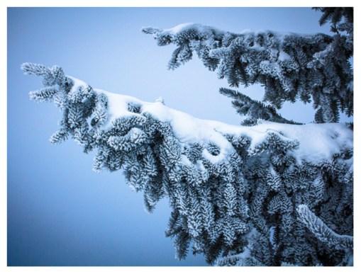 26|01|2013 – Winterwald im Westerwald
