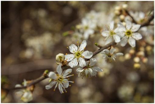 30|03|2014 – Frühling