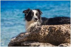13|06|2014 – Nell beim Sonnenbaden