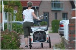 Joey auf Norderney – Der Fahrradknast