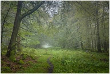 26|08|2014 – Waldweg am Knoten im Nebel