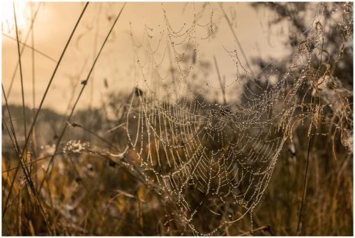 17|09|2014 – Ins Netz gegangen