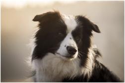 07|12|2014 – Ganz verträumt: Nell
