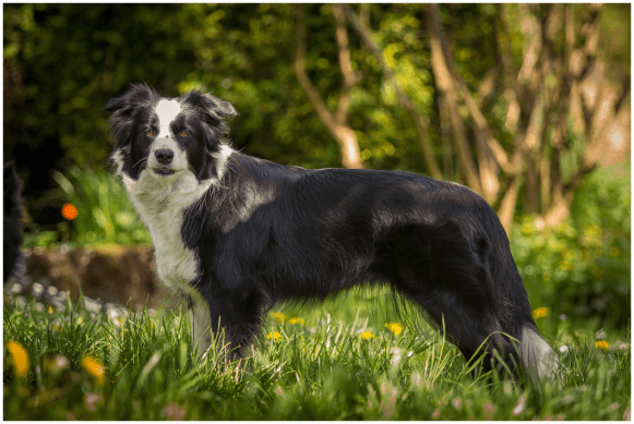 10|05|2015 – Nell