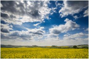 17|05|2015 – Blühende Felder bei Merenberg