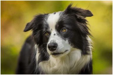 29|07|2015 – Verträumter Blick: Nell