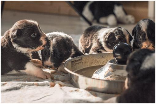 30|09|2015 – Die erste Mahlzeit