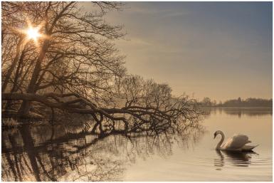 März: Idylle am Seeweiher