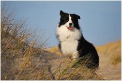 »Joey« macht Urlaub auf Norderney