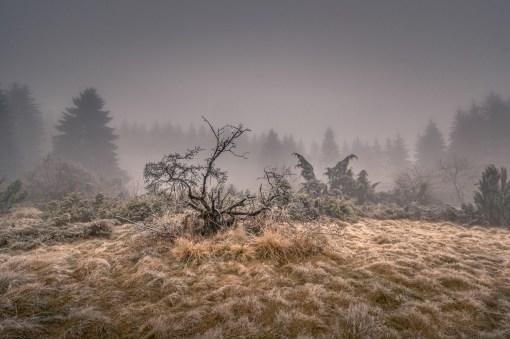 03|01|2016 – Die Wacholderheide im Nebel