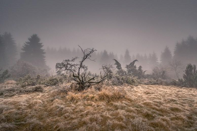 03 01 2016 – Die Wacholderheide im Nebel