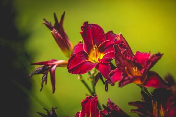 01|08|2016 – Im Garten