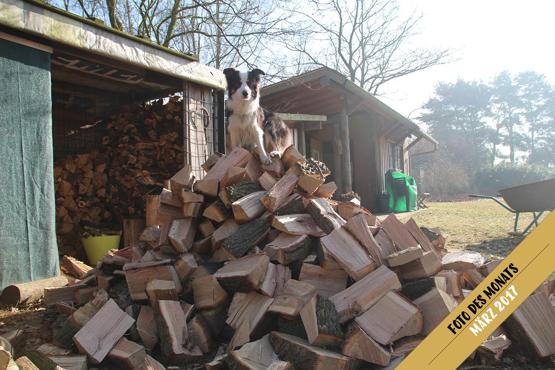 Foto des Monats: Ich und mein Holz … »Iska« Broadmeadows Beauty Queen