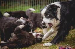 11|04|2017 – Spielen mit Mama
