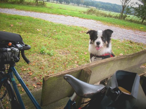 Fahrradtour mit Border Collie am Nord-Ostsee-Kanal