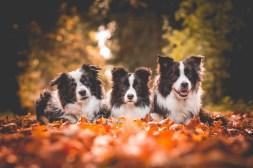 20|10|2017 – Nell, Heidi und Ida