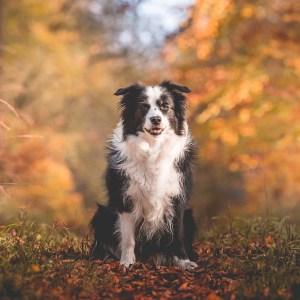 Für immer Herbst
