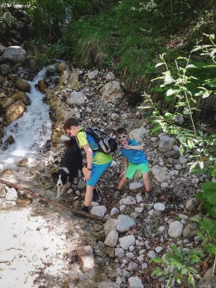 Border Collie bei einer Wanderung bei Kufstein in Tirol