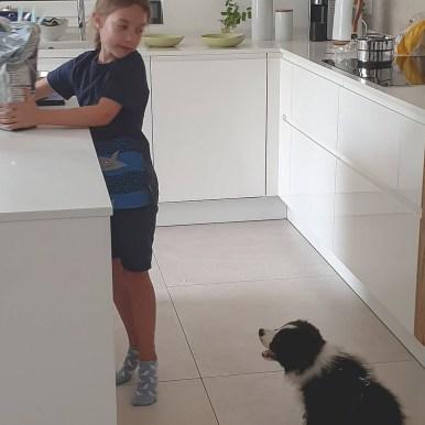 Border Collie Welpe und Kind in der Küche