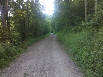 Dirt road running through Wayne National Forest