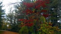 Park Red Tree
