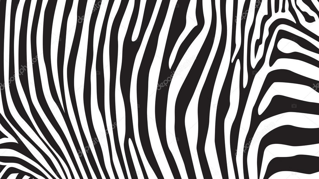zebre motif