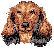 Hundbrodyr Långhårig tax