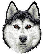 Hundbrodyr Sibirian husky 2