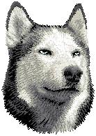 Hundbrodyr Sibirian husky 1