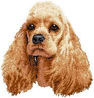Hundbrodyr amerikansk cockerspaniel