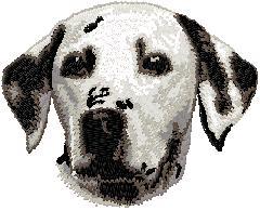 Hundbrodyr Dalmatiner
