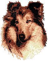 Hundbrodyr Collie