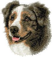Hundbrodyr australiensk shepherd