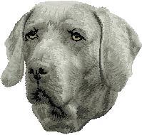 Hundbrodyr Weimaraner