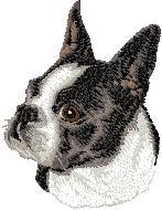 Hundbrodyr Boston terrier