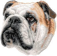 Hundbrodyr Engelsk bulldog