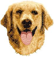 Hundbrodyr Golden retriever