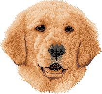 Hundbrodyr Golden retriever valp