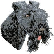 Hundbrodyr Kerry Blue terrier
