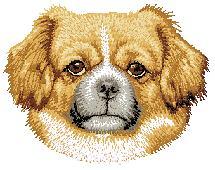 Hundbrodyr Tibetansk spaniel