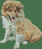 Shetland Sheepdog sobel valp brodyr