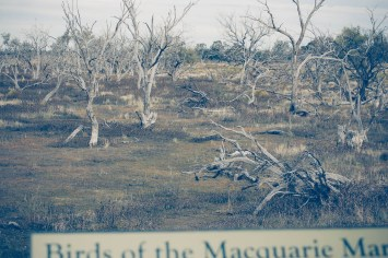 Birds of the Macquarie Marshes
