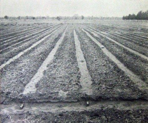 Lucerne plot